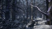 cold forest.jpg